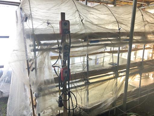 タラノメ水槽棚