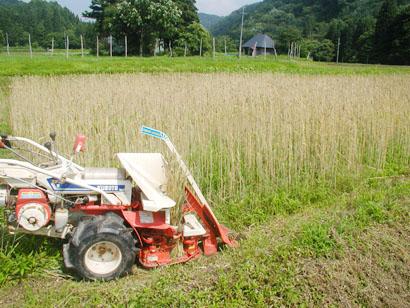 アリーナの収穫