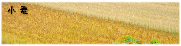 小麦タイトルロゴ