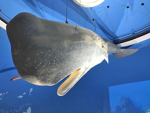 鯨と海の科学館1
