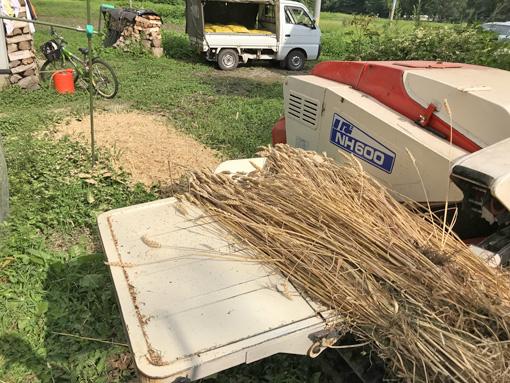 小麦の脱穀2019
