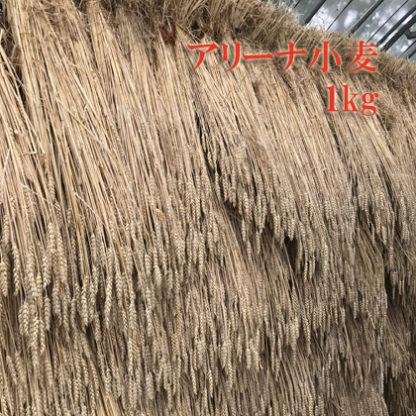 アリーナ小麦1kg