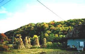 秋の七内川