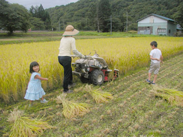 稲刈り家族