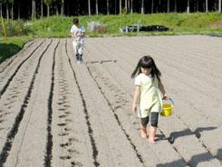 小麦の播種