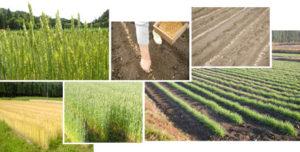 小麦の栽培記録