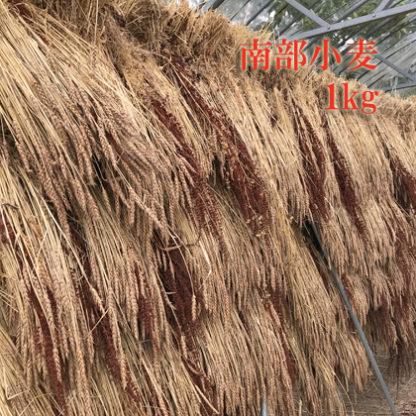 南部小麦1kg