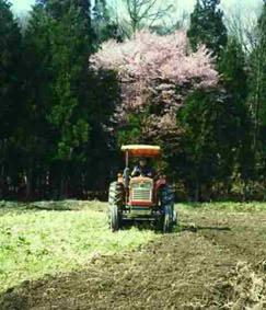 山桜とトラクター
