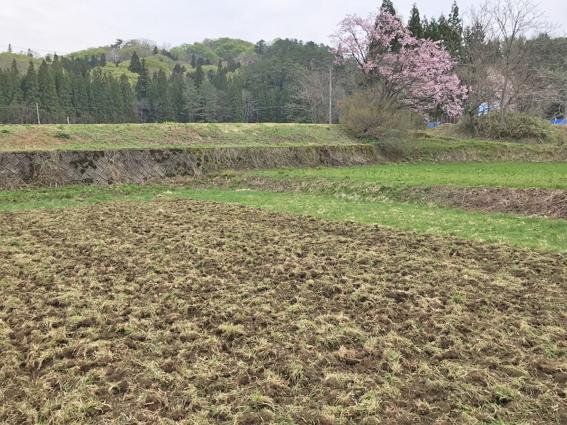 小麦畑の開墾