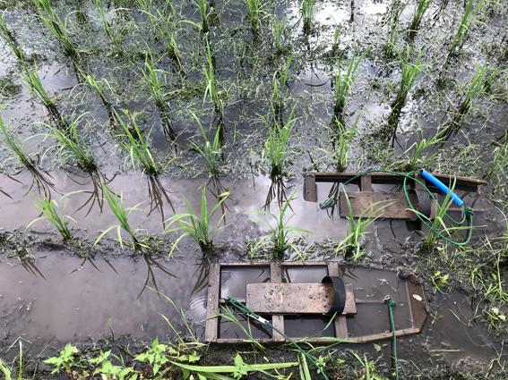 下野除草の効果