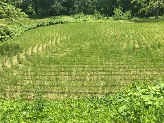 南部小麦畑