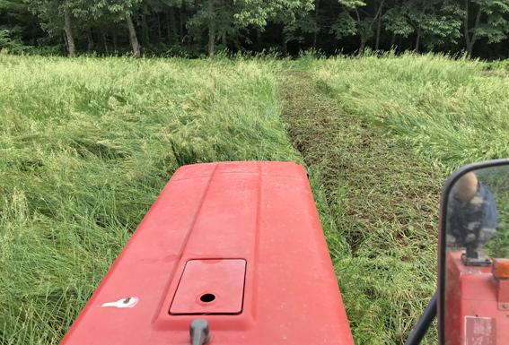 緑肥の漉き込み