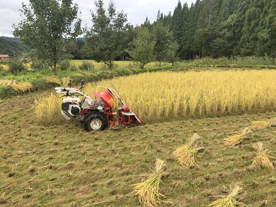 稲刈りやまなし田2020