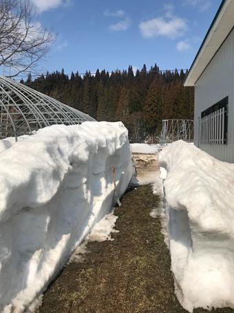 ハウス除雪難関場所