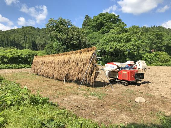 南部小麦の脱穀